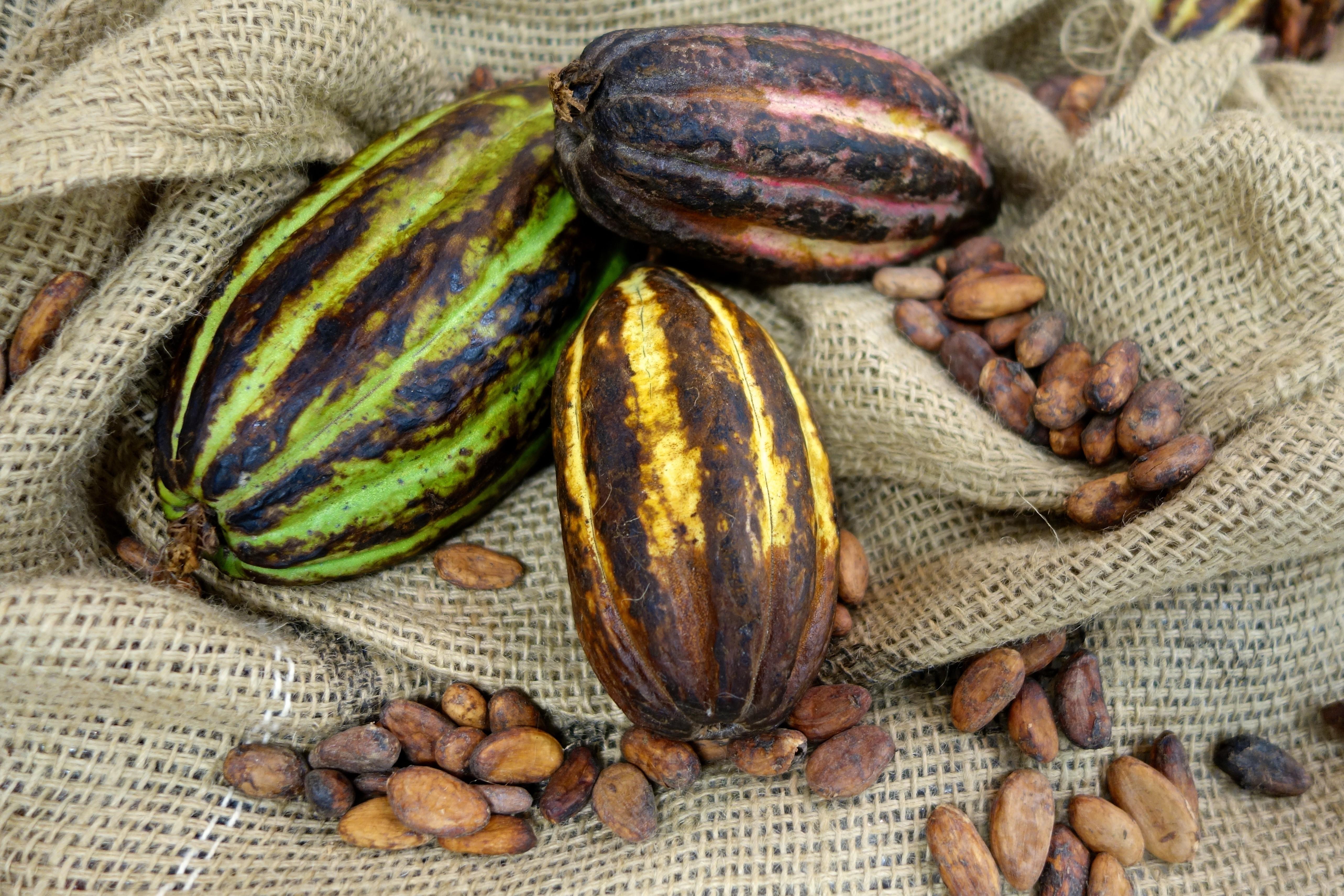 Soorten cacao